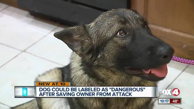 Dog could be labeled as -dangerous- after saving owner from attack