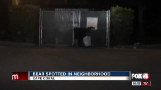 Bear on the run in Cape Coral