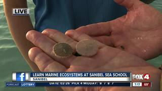 Interactive learning at Sanibel Sea School