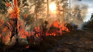 Collier wildfire the largest in the state