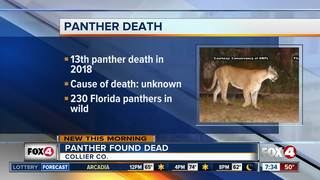 Florida panther found dead in Collier County