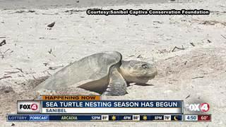 Kemp's Ridley sea turtle found on Sanibel Beach