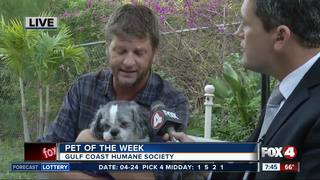 Pet of the week: Toni