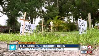Neighbor shoots dogs dead to protect goats