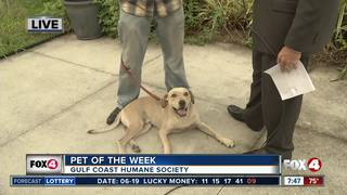 Pet of the Week: Mack