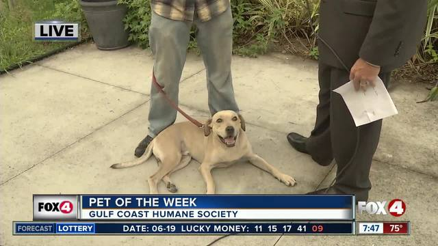 Pet of the Week- Mack