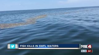 Massive fish kill spotted off Boca Grande