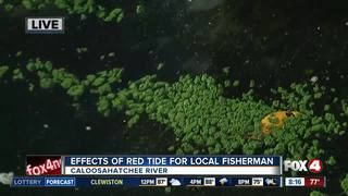 Effects of algal blooms on local fisherman