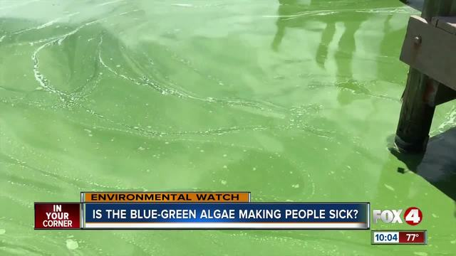 people blame poor health on blue green algae