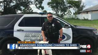 Cape Coral Police officer saves dog