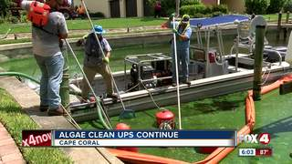 Algae cleanup: How long will it take?