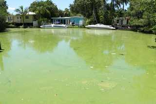 Researchers to test people exposed to algae