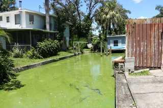 Photos: Algae crisis in Lee Co. in summer 2018