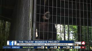 Monkeys find forever home at local nonprofit