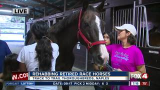 Track to Trail Thoroughbreds rescues race horses