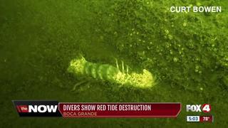 Divers show red tide destruction