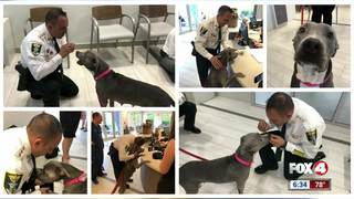 Dog shot in Lehigh Acres recovering