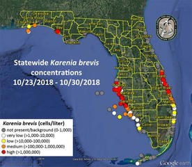 Low levels of red tide have spread to Pensacola