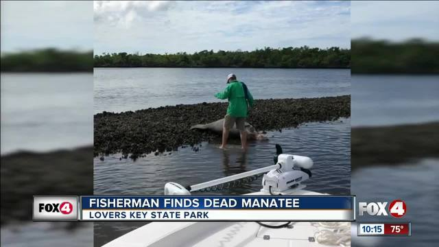 Bonita Spring fisherman finds dead manatee